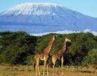 Новое направление в туризме - Танзания